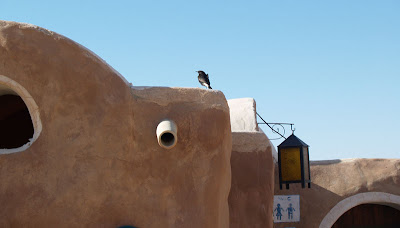 tataouine, bird, Tunisia
