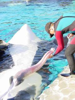Пизда кита
