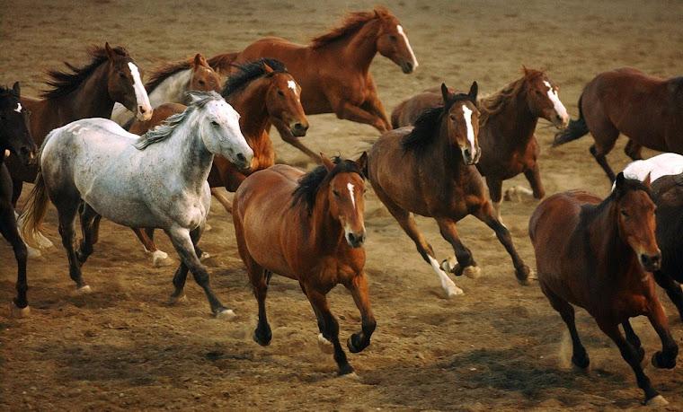 Wild Horsefeathers