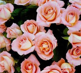 Flores para quem amamos