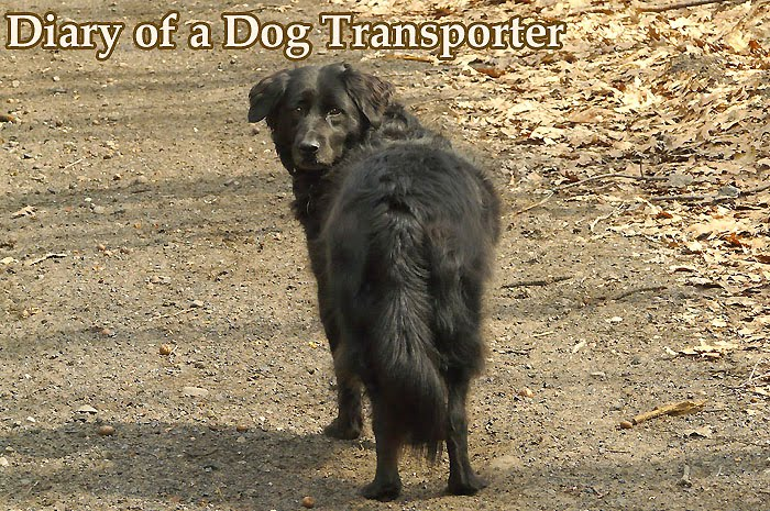 Diary of a Dog Transporter