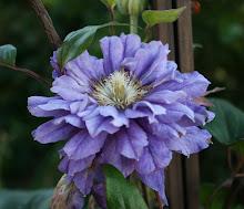 Trädgårdsbloggar på Facebook!!