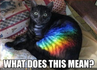 a cat lying on a bed with some light prismed on its fur creating a rainbow with the caption What Does this mean?