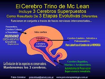 funciones del cerebro humano. funciones del cerebro humano.