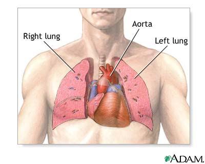 Dr. George Blog: Trasplante de corazón y pulmón - Trasplante ...