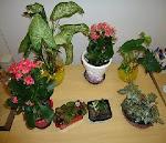Minhas Plantinhas....