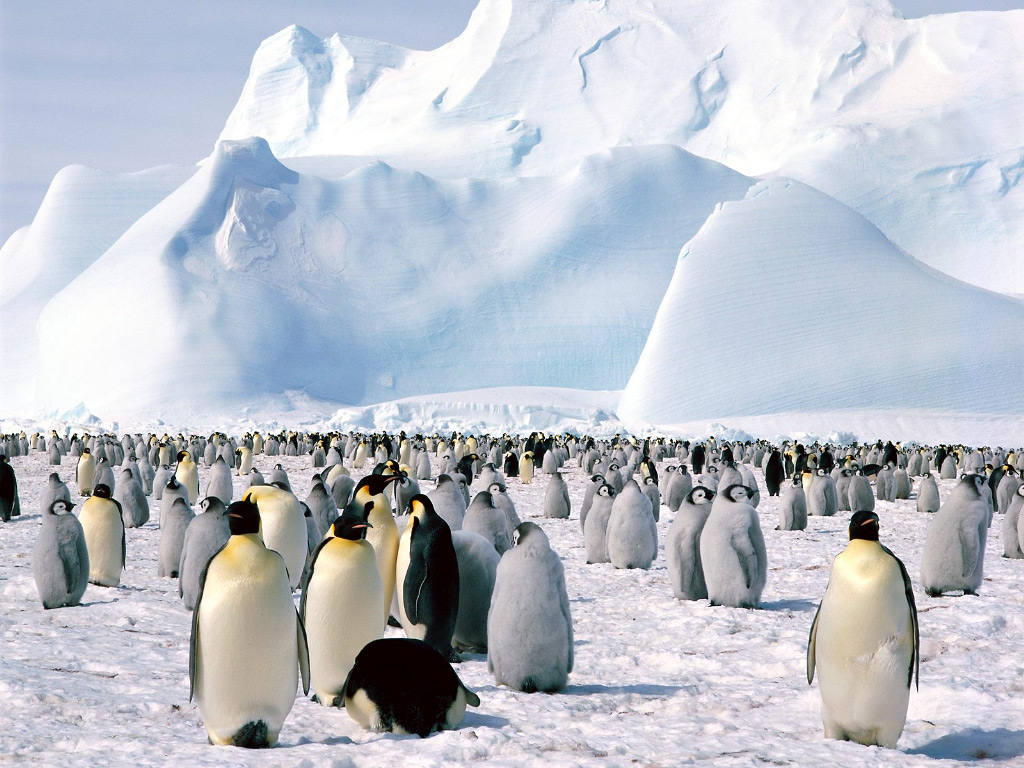 Turistul 40650-0-antarctica