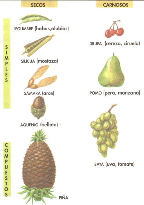 external image frutos.jpg