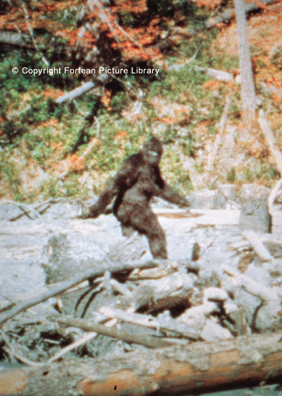 Bigfoot Sasquatch Photos
