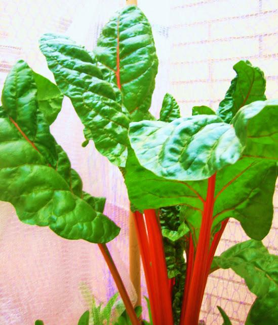 Frutas y hortalizas las frutas y los colores frutas y - Frutas diureticas y laxantes ...