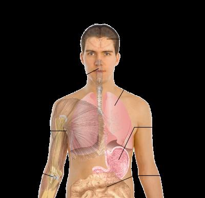 Gejala utama virus flu babi pada manusia