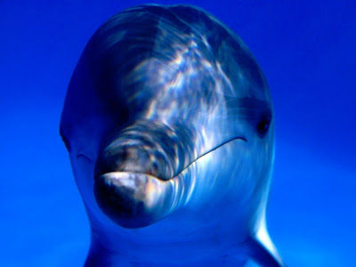 hd dolphin wallpapers