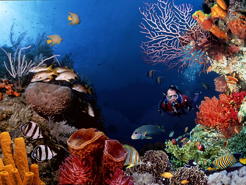 Wallpaper pemandangan bawah laut