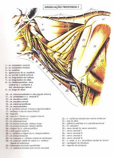 Assuntos de anatomia