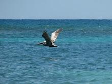 St.Croix, US Virgin Islands