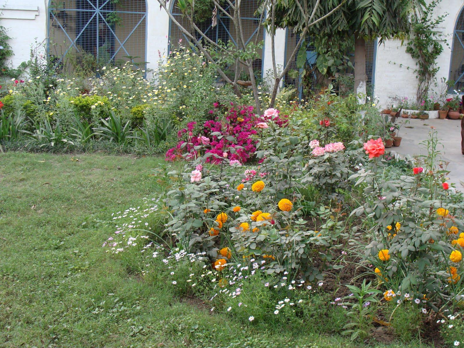 India garden butterfly garden for Garden