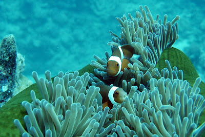 fish and coral reef at ujungkulon national park