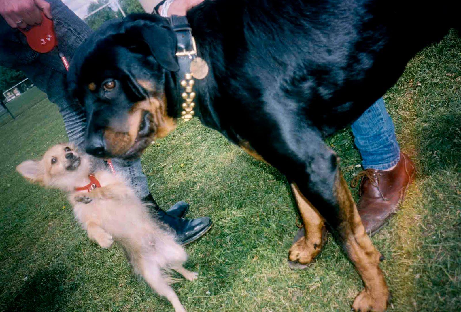 http://4.bp.blogspot.com/_eE3-8zKLl7Q/SxQjRH7BsaI/AAAAAAAAAaw/heV81i00-9I/s1600/dog+fight.jpg