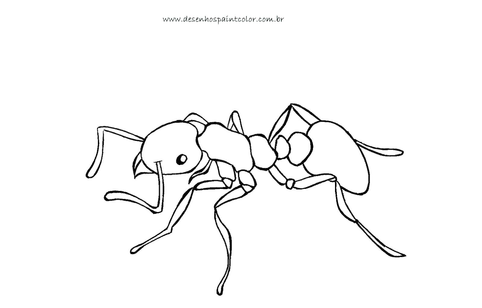 Desenho ou riscos de formiga para imprimir e colorir no - Paint para pintar ...