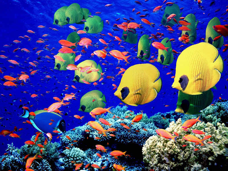 UNDER THE SEA title=