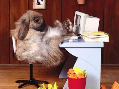 http://4.bp.blogspot.com/_eIARuH0-x4Y/S9IIdY2ib8I/AAAAAAAABXU/250Vd48EVak/s400/cute-bunny-computer-500.jpg