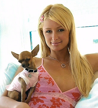 Paris Hilton investigated for too many Pooches