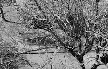 My own tree...