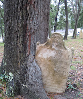 tree gravestone engulfed by tree