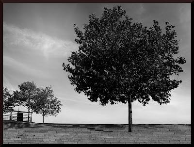 Quand il n'y a plus d'arbres...
