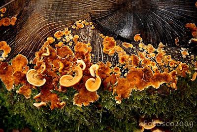 Trois champignons & co