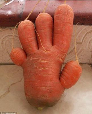 cenoura mão