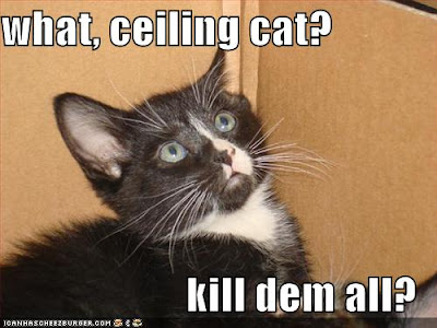 funny-pictures-ceiling-cat-tells-kitten-
