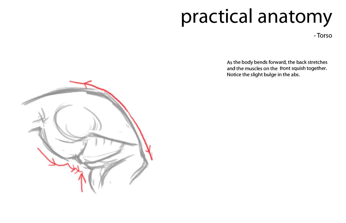 Anatomy lessons to the bigboyby babestv 2