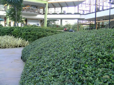 park mall cebu