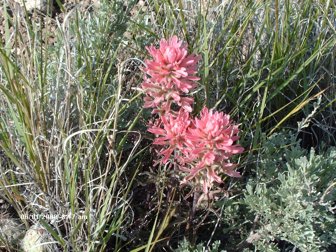 Decorating My Tin Shack Pink Saturday in Wyoming