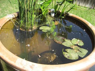 Suburban Wildlife Garden Container Water Garden