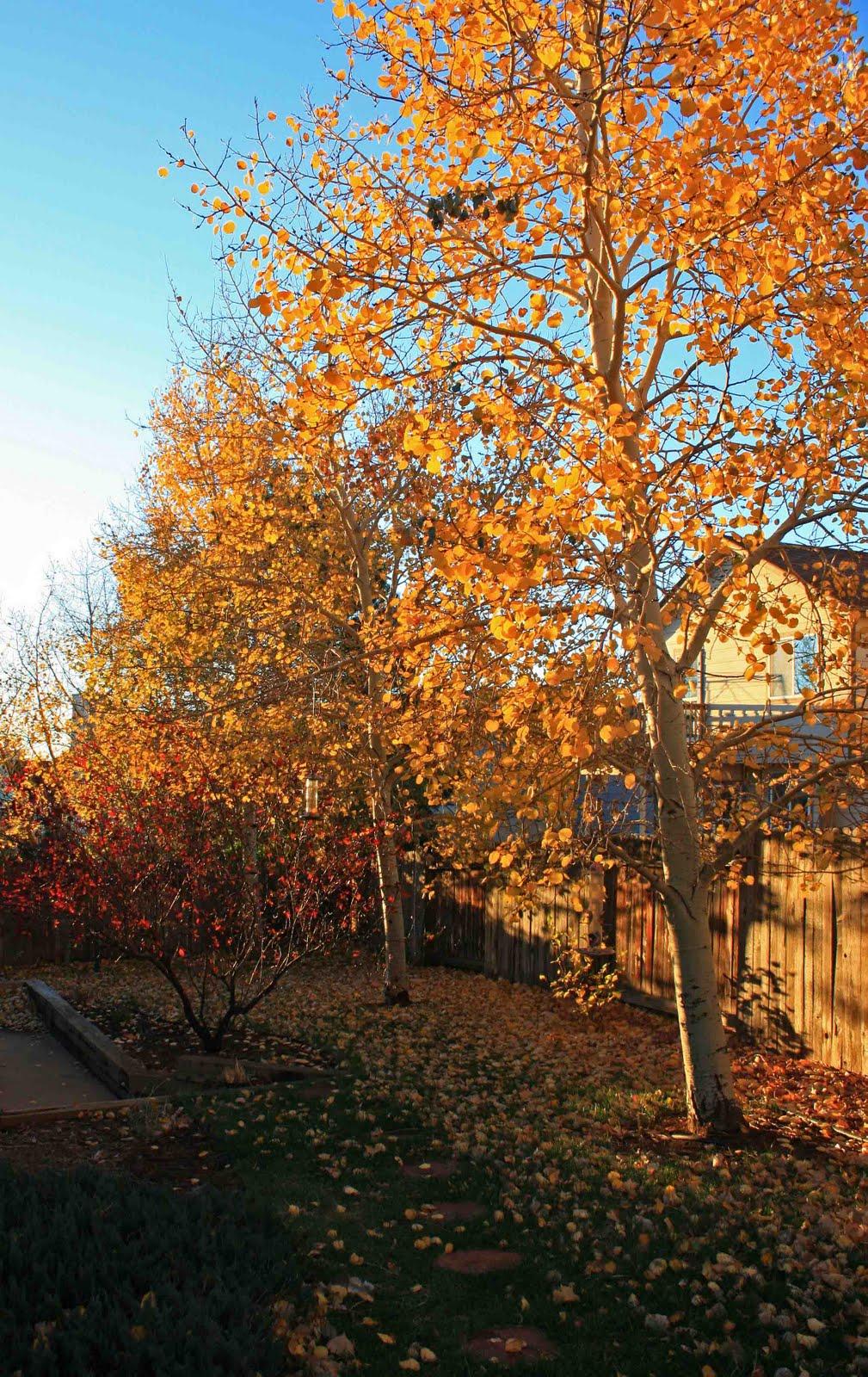 fall at aspen hill