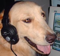 moliere un perro bloguero red