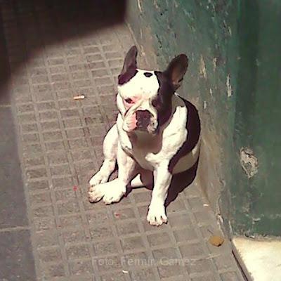 Enigma canino es un texto escrito por Fermín Gámez.