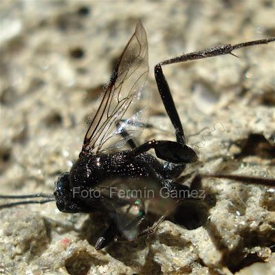 sueño de insecto