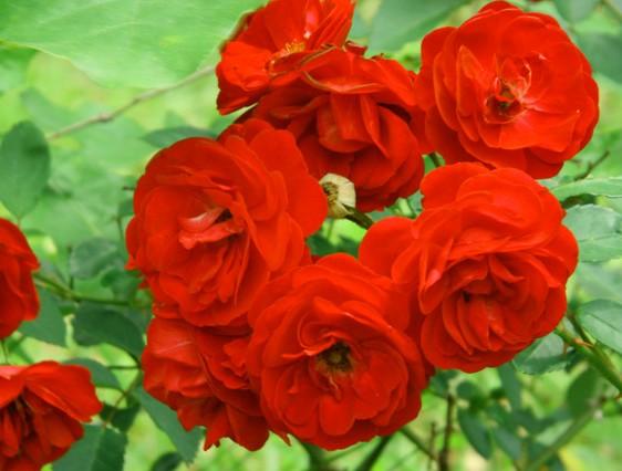 Lirik mawar bunga