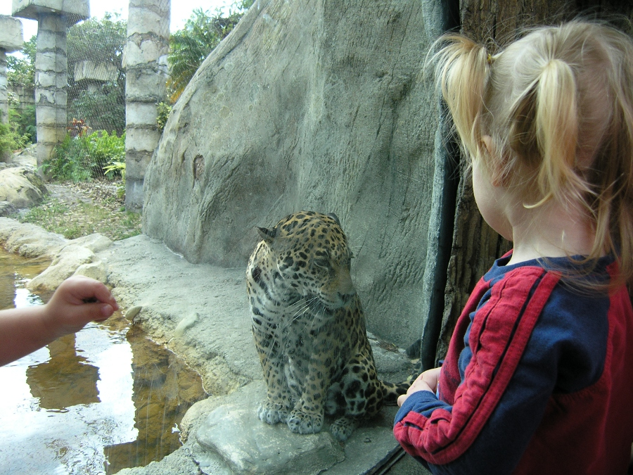 Wonderful Child Looking At Jaguar At Palm Beach Zoo
