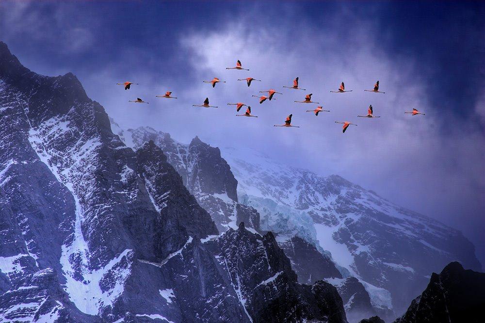 [flamingos+in+flight+in+habitat+-+chile.jpg]