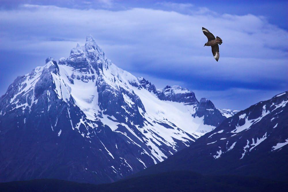 [skua+in+flight+-+Beagle+Channel+.jpg]