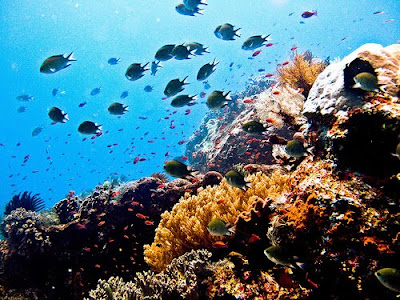coral Bali