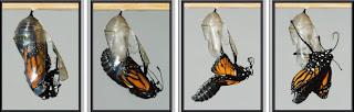 Menjadi Kupu-kupu