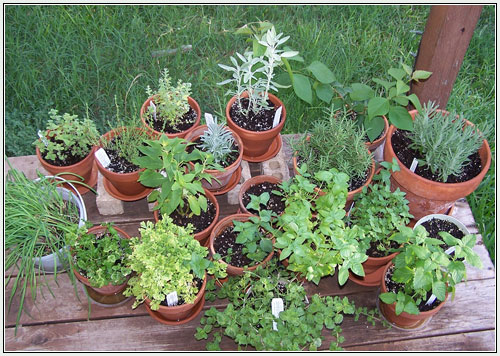 Garden of steph container herb gardens for Container herb garden