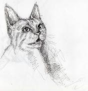 Aqui otro de mis dibujos a lapiz pero de esta sexy mujer que es Angelina . jolie