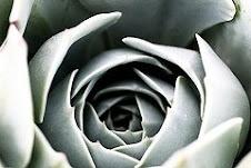 Una flor de felicidad