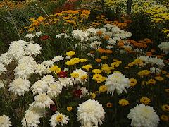 Cooperativa das Flores